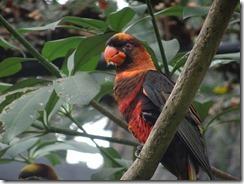 Nature Park - parrot