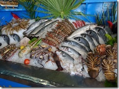 Tethymno fish display