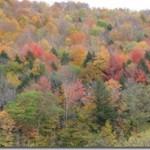 Bifurcate Foliage 1