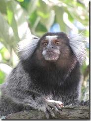 Monkey Close Up-5