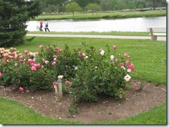 RC - Mem Park - Roses