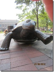 Turtle at Copley Plaza