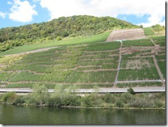 Mosel-vineyard-g
