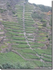 Mosel-vineyards-steep-g