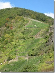 Mosel-vineyards-steep