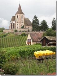 winery-vineyard