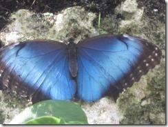 Fairchild-butterfly-g (3)