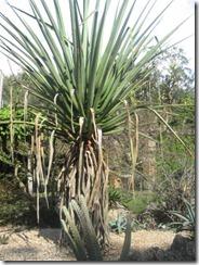 Fairchild-succulent