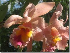 Fairchild-tropical-g