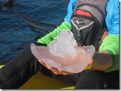 kayak-llyfish-gj