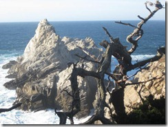 Pt Lobos rocks-g (2)