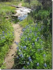 wildflowers-park-g (2)