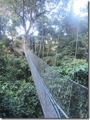 canopy walk 01