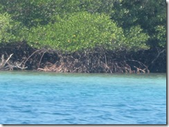 mangroves everywhere