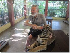 Tom feeding tiger