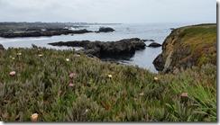 MacKerricher-cliffs-flowers