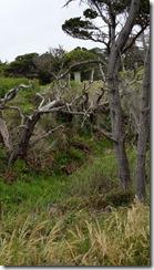 Mendo-Gardens-shore-trail