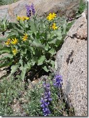 Shealor Lake-flowers