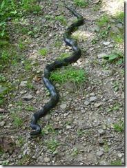 Shenendoah-hike-Blackrock-snake