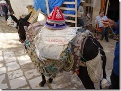 donkey taxi 02