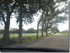 Oak Alley Plantation 01