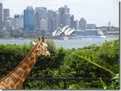 giraff with sydney opera house in background 02