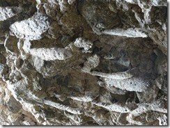 El Cubana park wasp nests