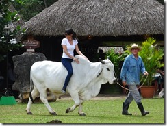 Vinales person on bull 02