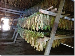 Vinales tobacco drying room 01