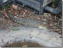 Nature Park - croc
