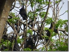 Nature Park - fruit bats