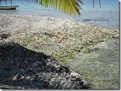 Fononu Island coral on beach
