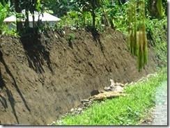 mud walls