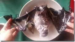 bat soup