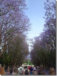 Athens - National Garden 02