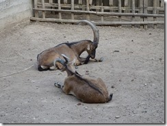 Athens zoo in park -