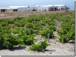 Boutari Winery 02