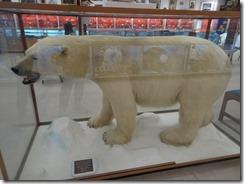 Itsanitaq museum bear