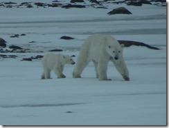 Mom and cub 02