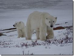 Mom and cub 05