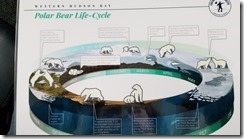 polar beer life cycle