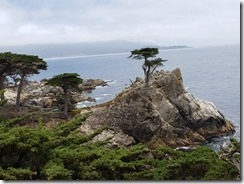 Long Cypress