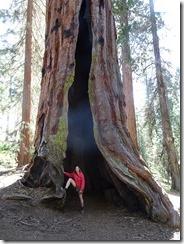 Mariposa - scarred tree w Joyce