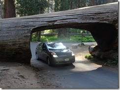 Sequoia NP - Tunnel Log (2)