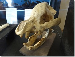 Hagerman fossil bone crushing dog