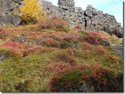 Pingvelie National Park - colorful foliage