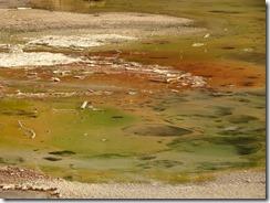 norris geyser basin 04