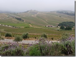 Daou Winery overview