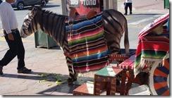 Tijuana man and donkey on street