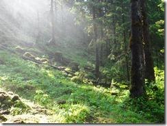 Cascade Creek sends a mist over the lush land